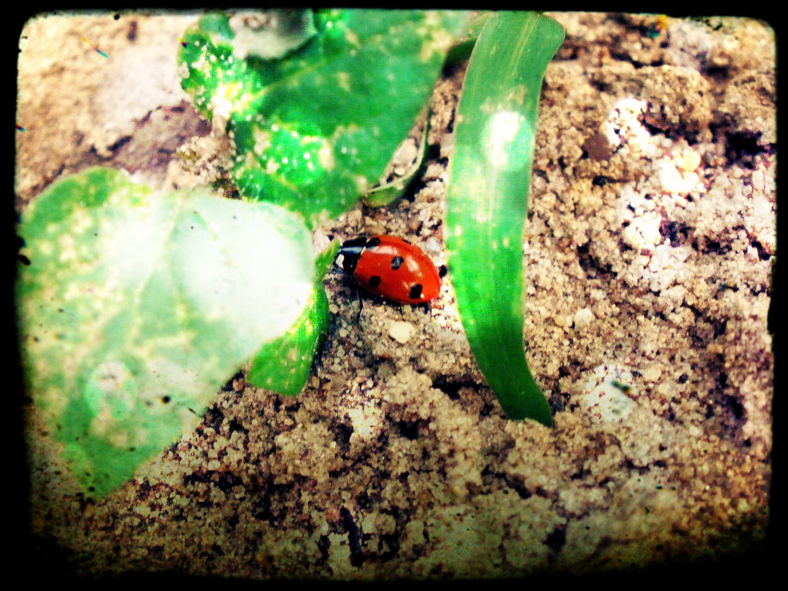 Made this myself, I love ladybugs!