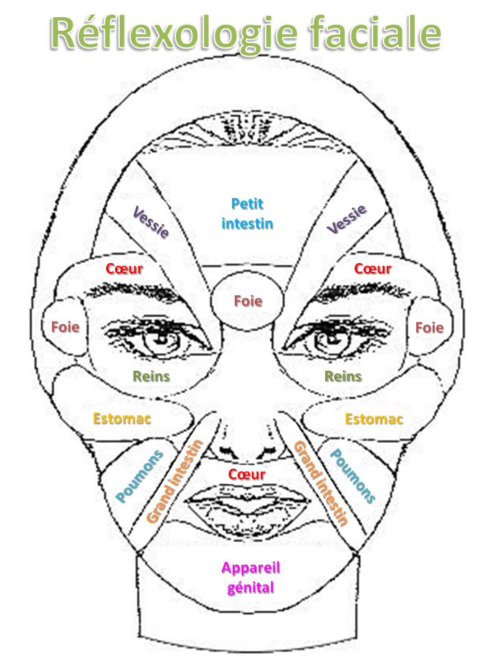 Extrem Réflexologie faciale simplifiée en français. A imprimer. | massage  ZD84