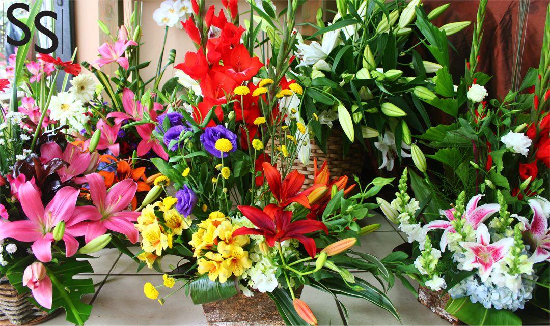 Flores de colores brillantes/Colorful Flowers