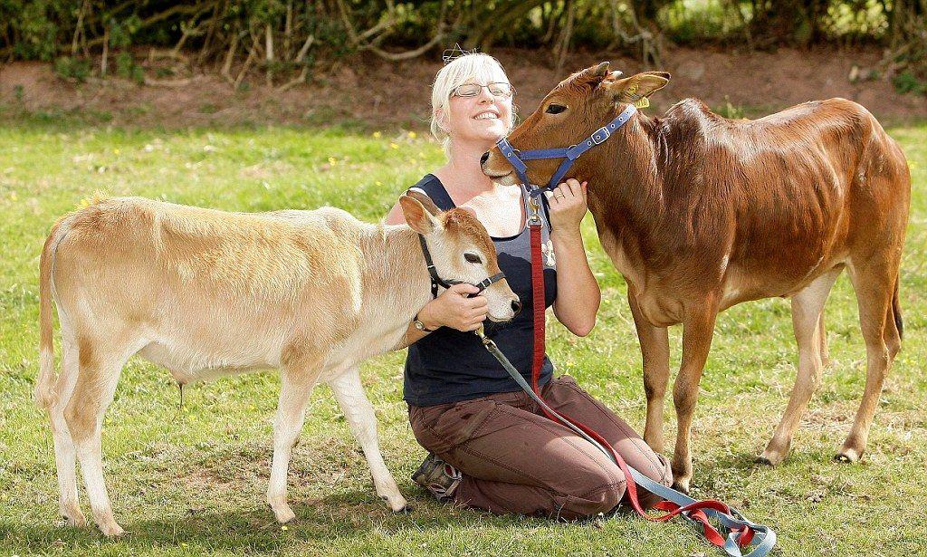 8 странных, редких и необычных пород коров