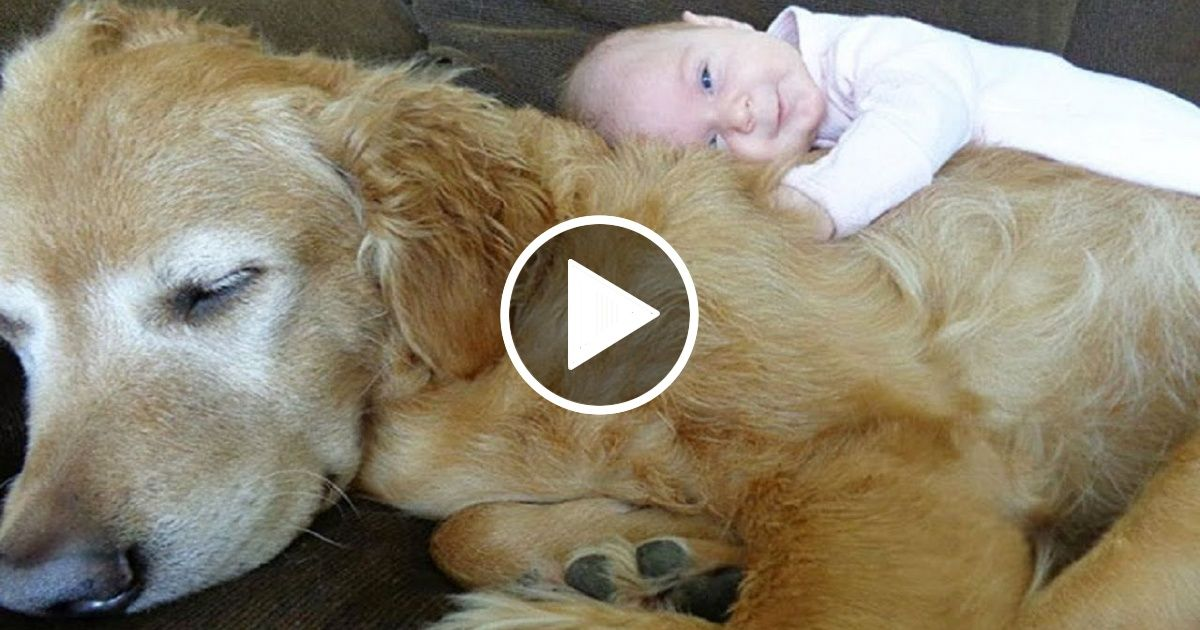 Amazing Dog Caring Baby As A Nanny Favorite Pins Pinterest