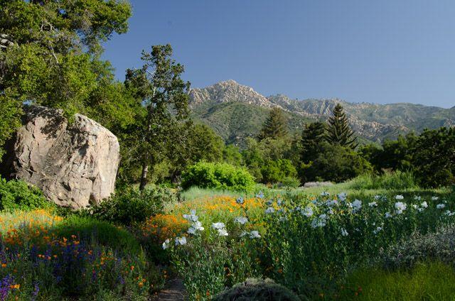 spring at the santa barbara botanic garden photo by john wardlaw - Santa Barbara Botanic Garden