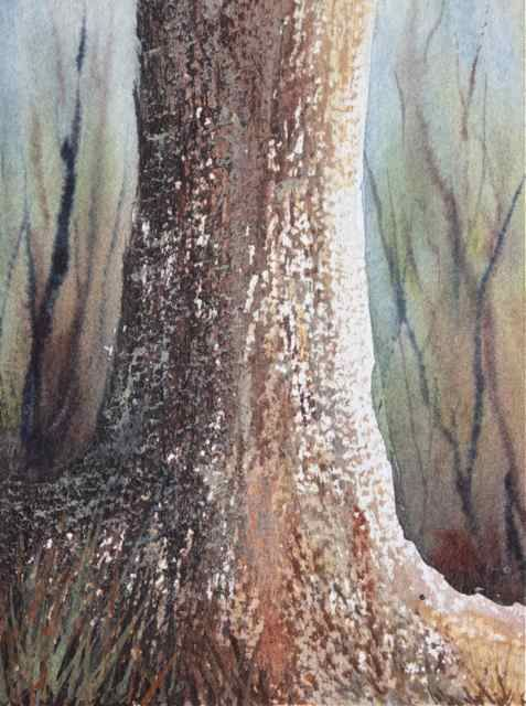 Watercolour Dry Brush Technique Used For Tree Bark Texture