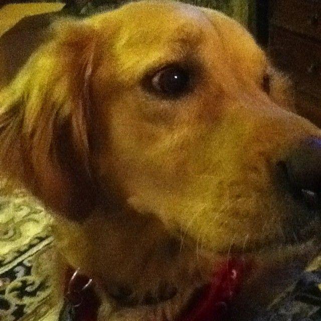 www.PetWellbeing.org