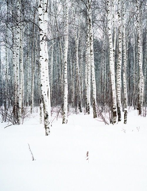 Winter * ~*. Wishes & Dreams .*~ * Snow Forest Of Iced