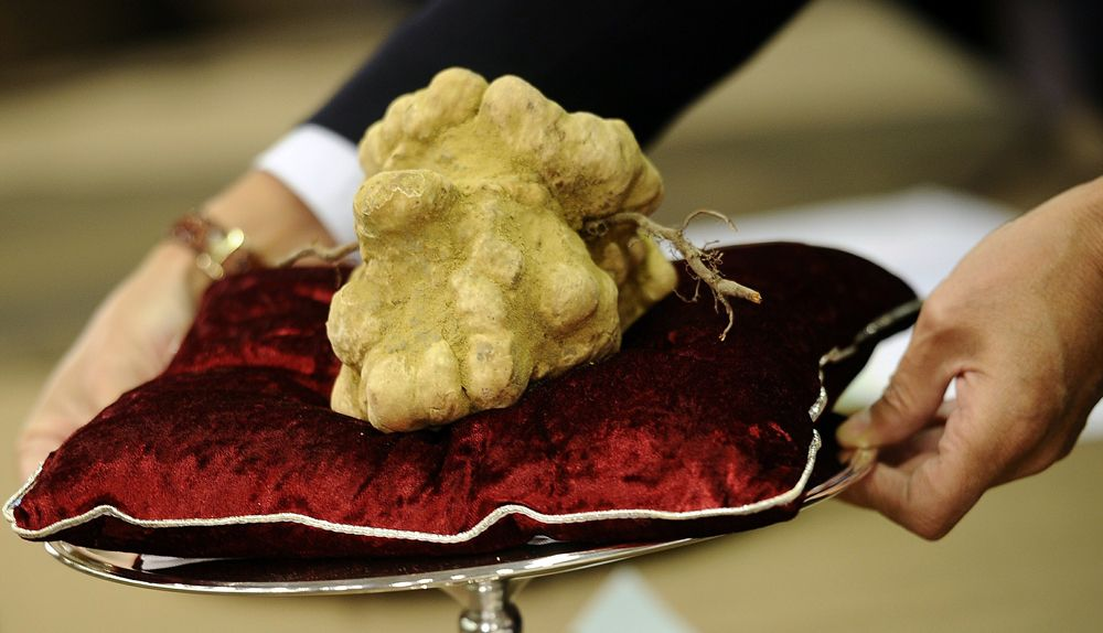 The Top 10 Most Expensive Food in the World | Most expensive food, Food, Luxury food
