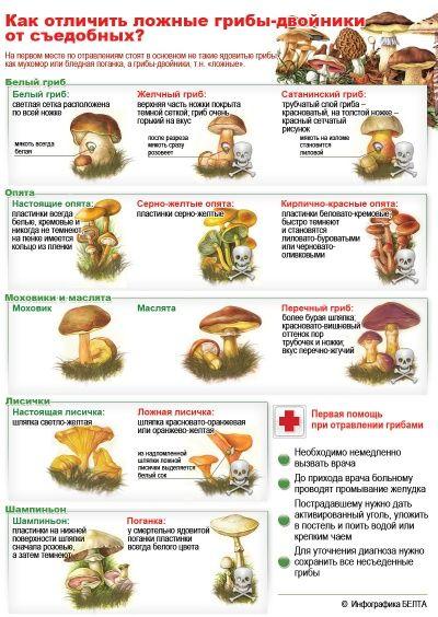 Как отличить ложные грибы-двойники от съедобных?