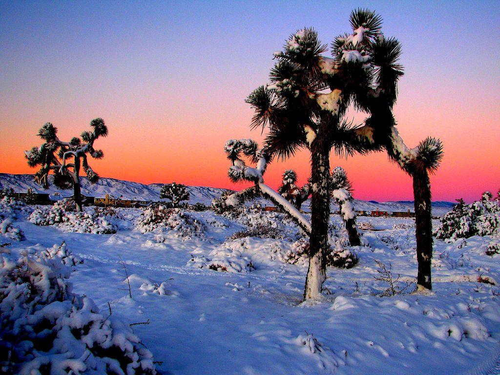 Joshua Tree National Park Californiathe Sun Rises Over Snow Clad