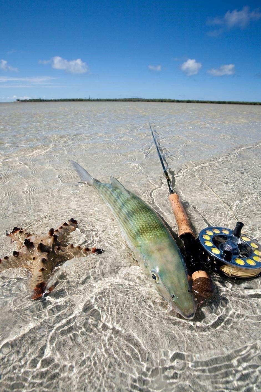 bonefish and rod