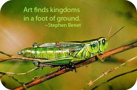 Grasshopper Totem Grasshopper Meaning And Grasshopper Symbolism Grasshopper Animal Totems Spiritual Animal
