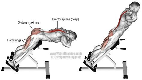 Hyperextension. A compound exercise for back, legs, and glutes. Visit site and watch the video to learn the difference between a hyperextension, back extension, and hip extension. Target muscles: Erector Spinae and Gluteus Maximus. Synergists: Hamstrings, and Adductor Magnus.