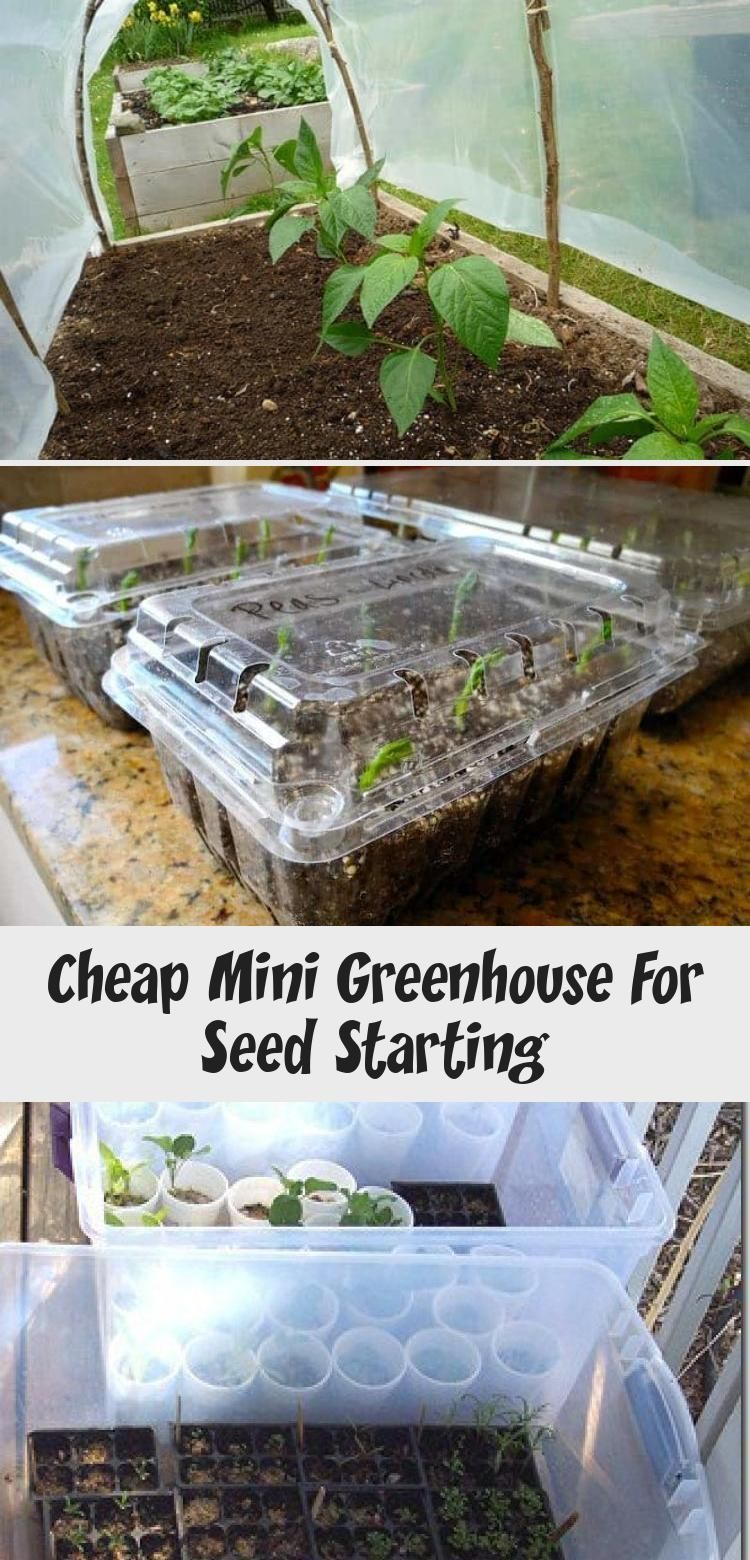 Cheap mini greenhouse for seed starting cheap