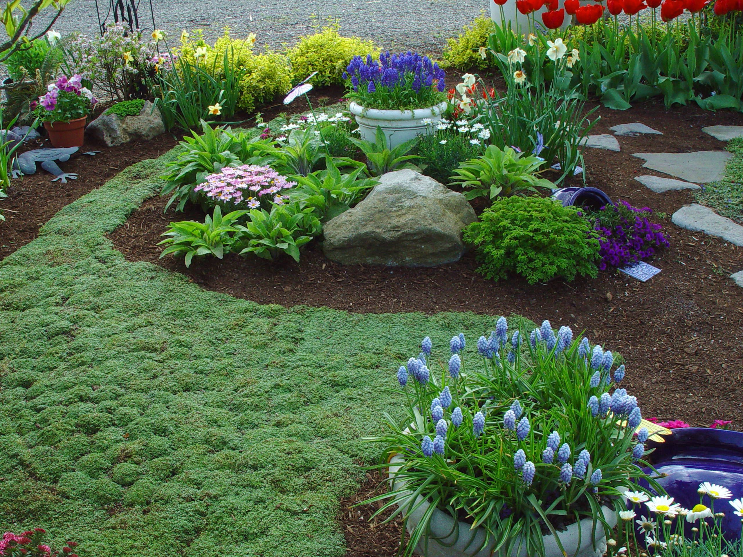 16 Spreading Plants For Paved Areas Lawn Alternatives Front Yard Landscaping Ground Cover Plants