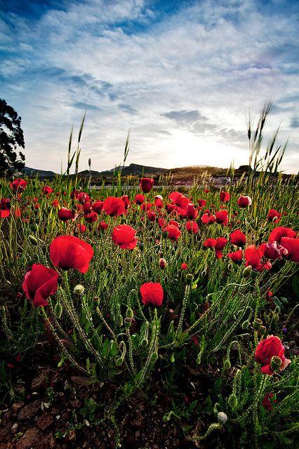 Spain - Cabo de Gata Natural Park: Begginings of Spring | Flickr - Photo Sharing!