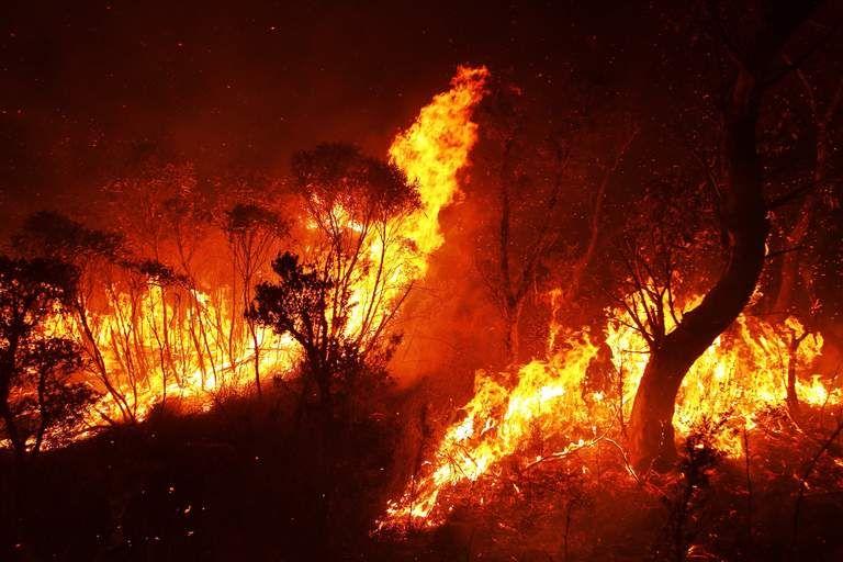 Nsw Bush Fires In 2019 Blue Mountain Fire Australian Bush