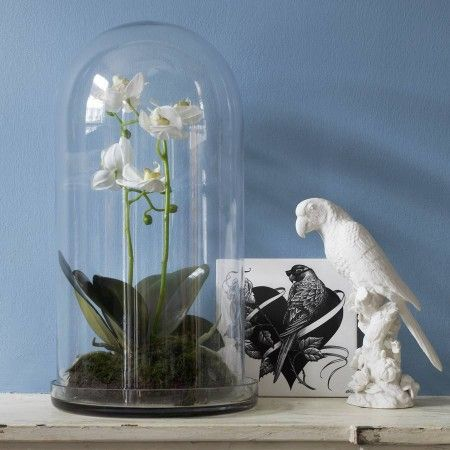 Orchid Bell Jar
