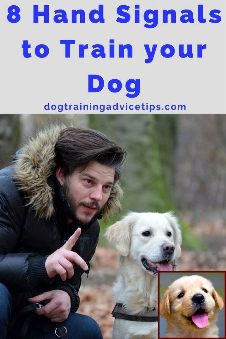 how to teach your dog to roll over step by step