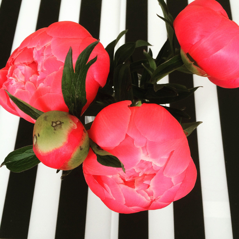 Pin by Lovebud on Flowers | Flowers, Fruit, Watermelon