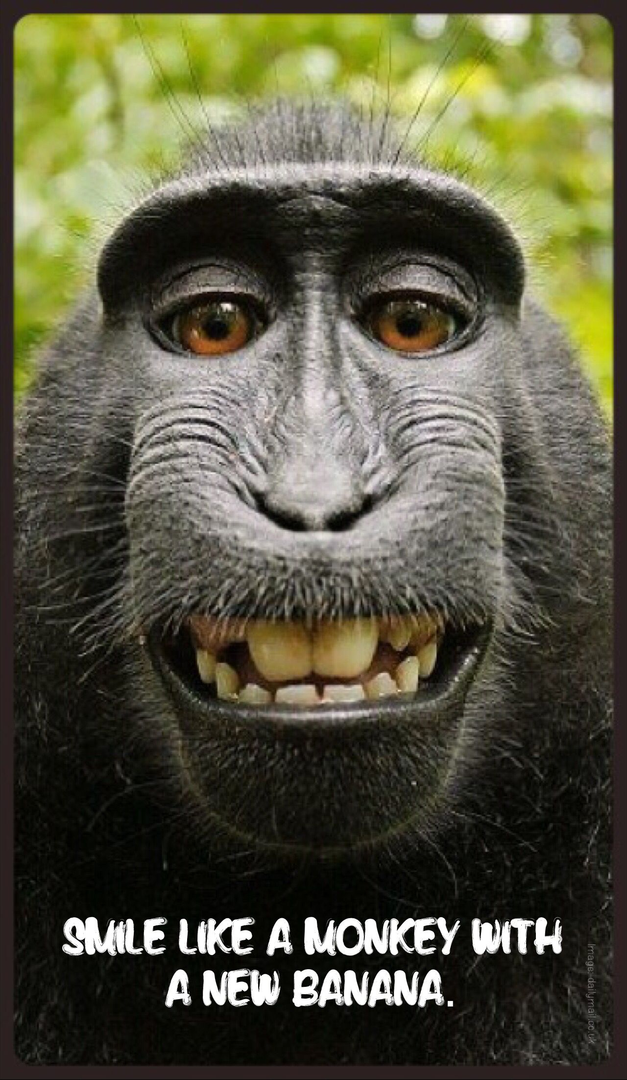 A Crested Black Macaque Smiles For His Self Portrait While Using