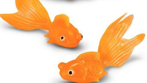 Clever Gal Takes A Plastic Goldfish And Watch What She Does With It. Amazing!   DIY Joy Projects and Crafts Ideas