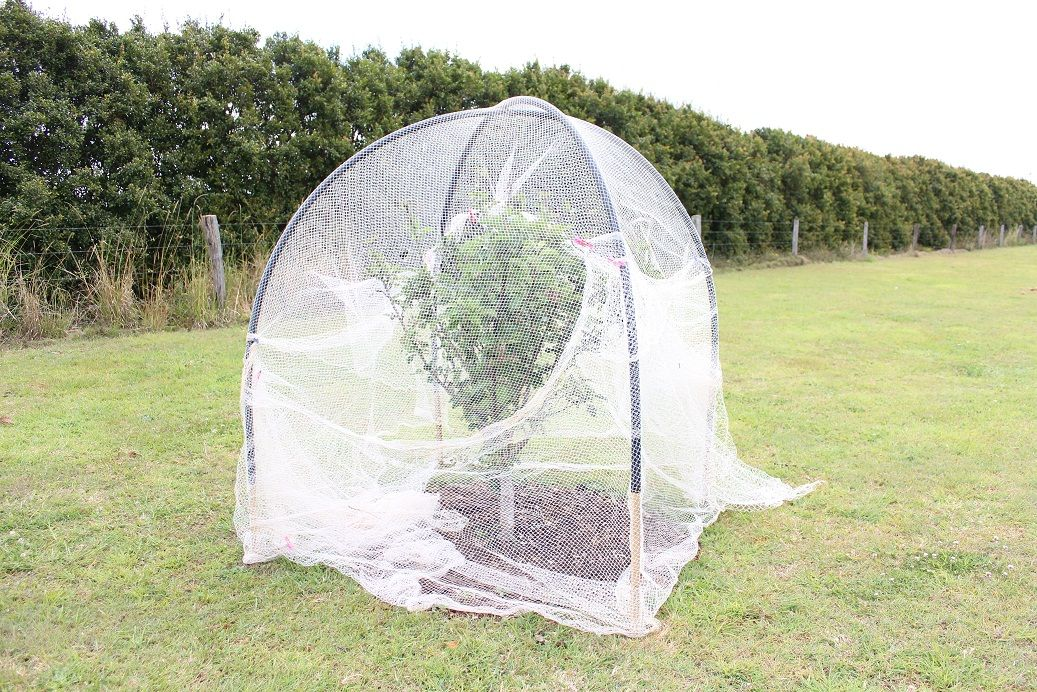 how to put bird netting over fruit trees