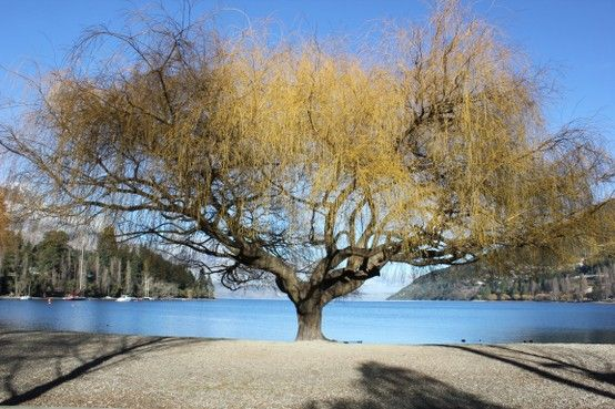 Queenstown New Zealand - one of my favourite places to visit