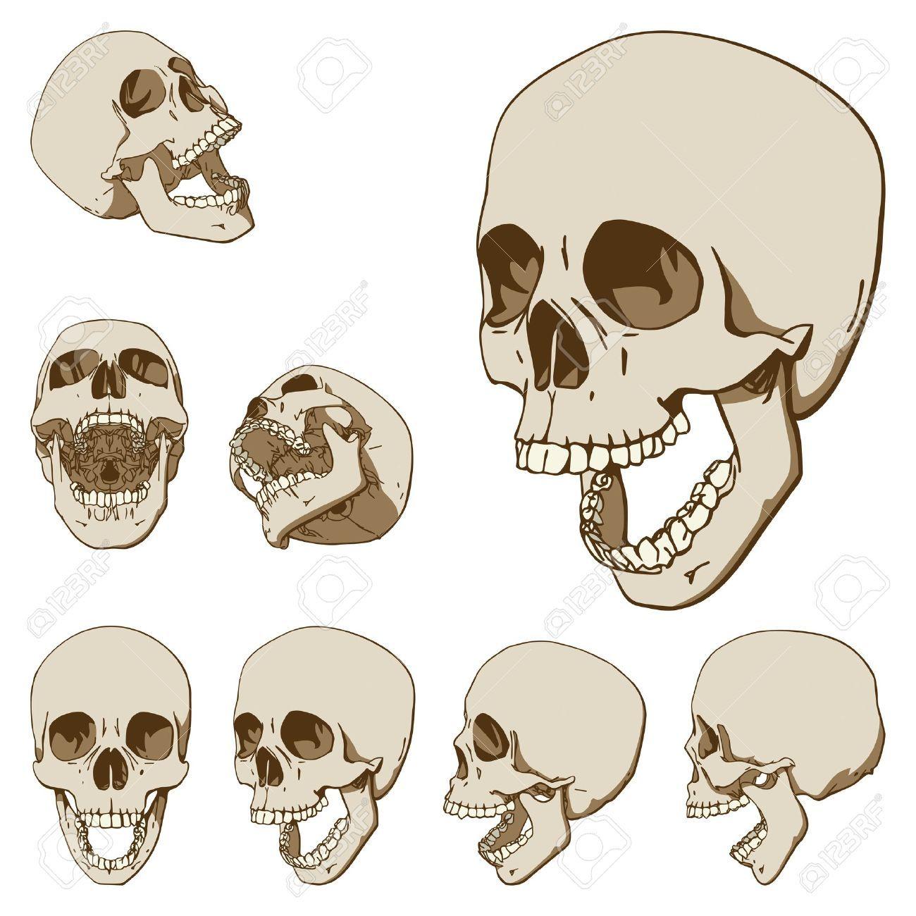 Resultado de imagen para craneo con la boca abierta | Cráneos ...