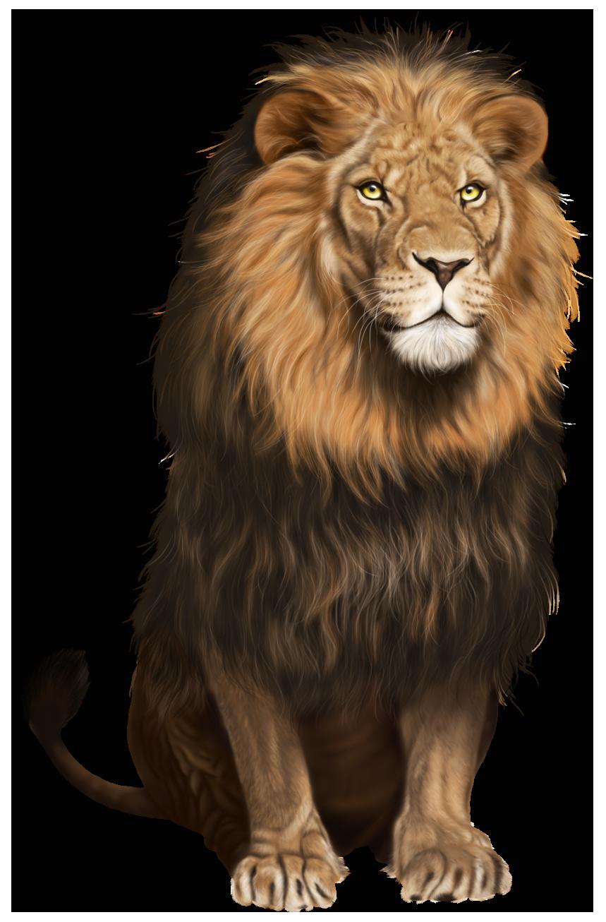 Pin by Modorova Svetlana on Картинки на белом фоне Lion