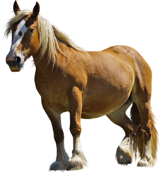 Brown Horse Png Clipart Horses Animal Learning Brown Horse