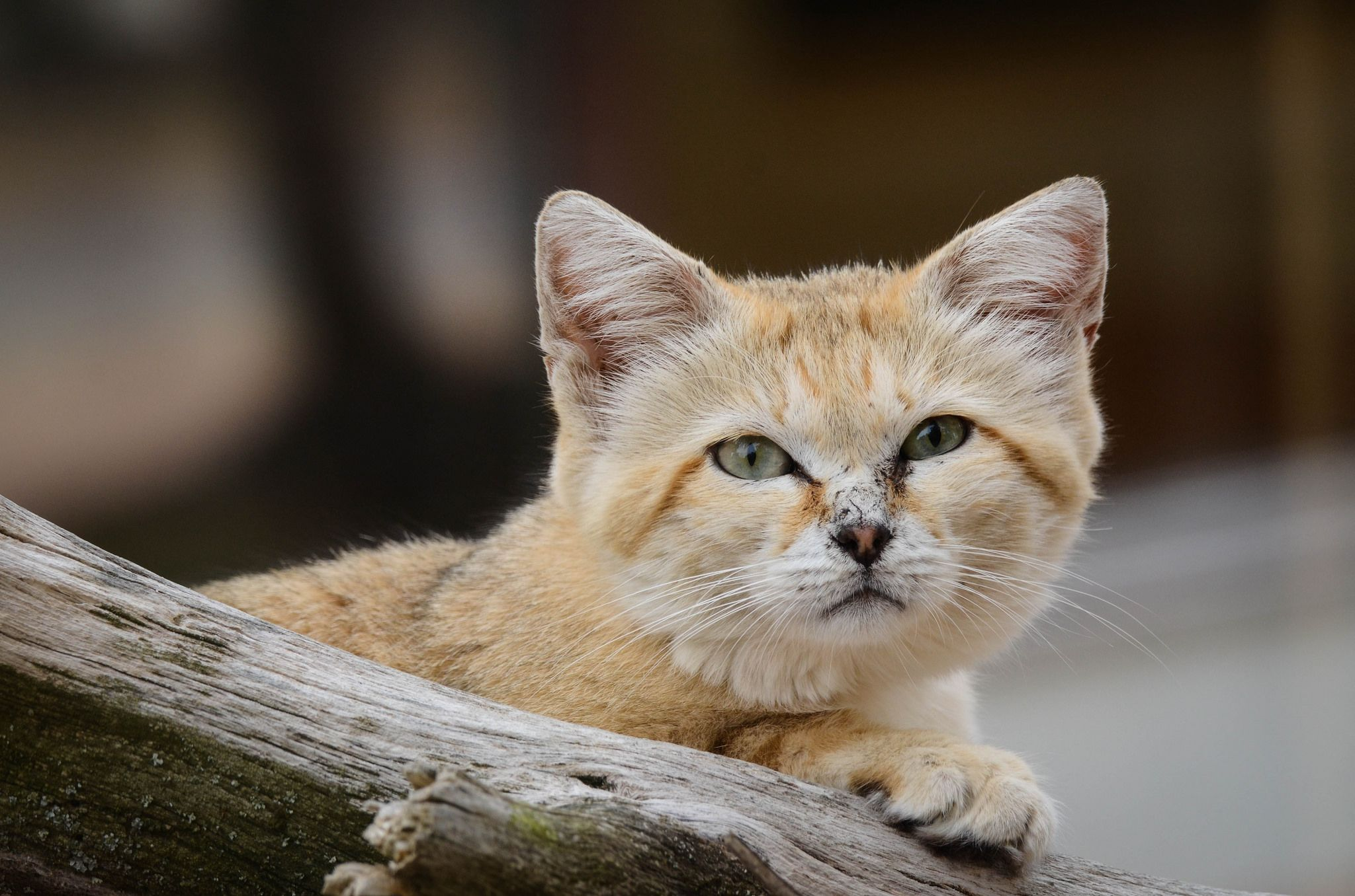 17 Ide Tentang Parken Zoo Di Pinterest Kucing Anak Kucing Dan