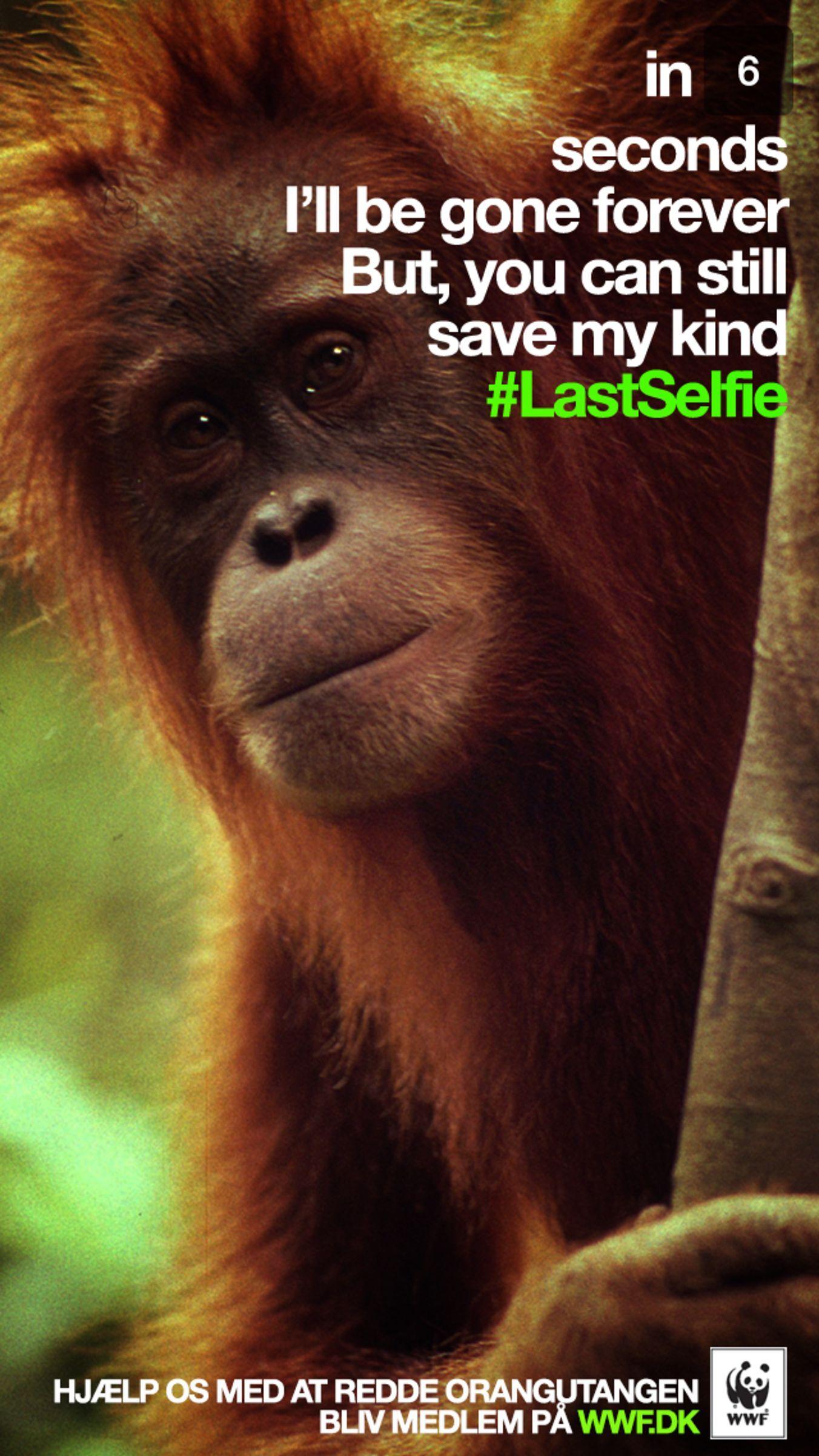 LastSelfie WWF Animal Extinction Snapchat Marketing