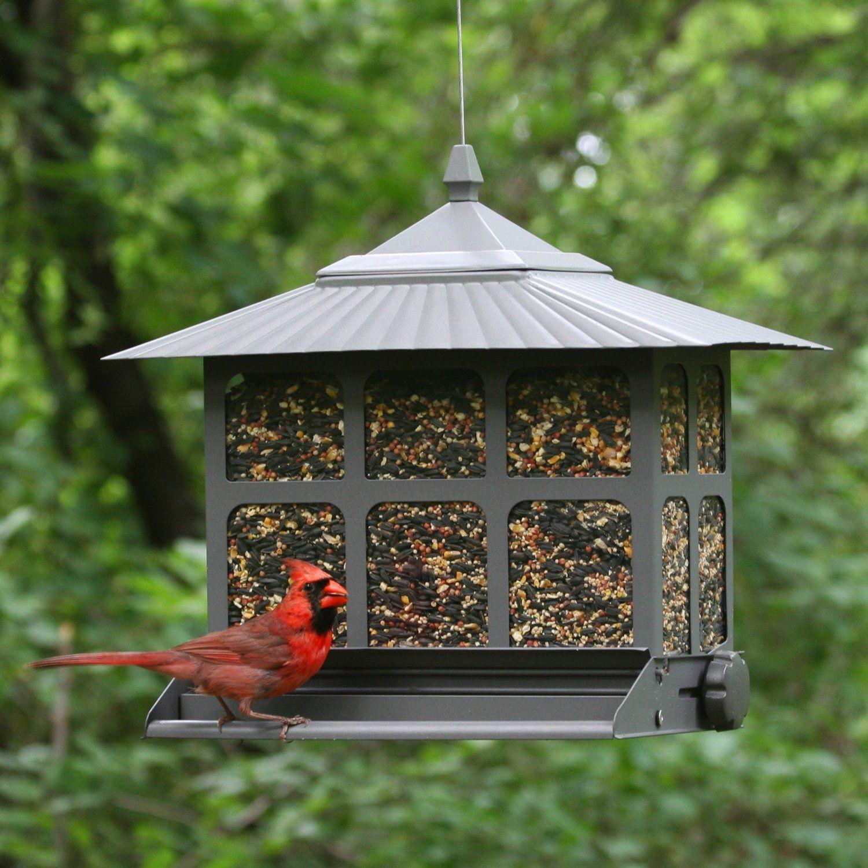 Affordable squirrel proof bird feeder httpsquirrel