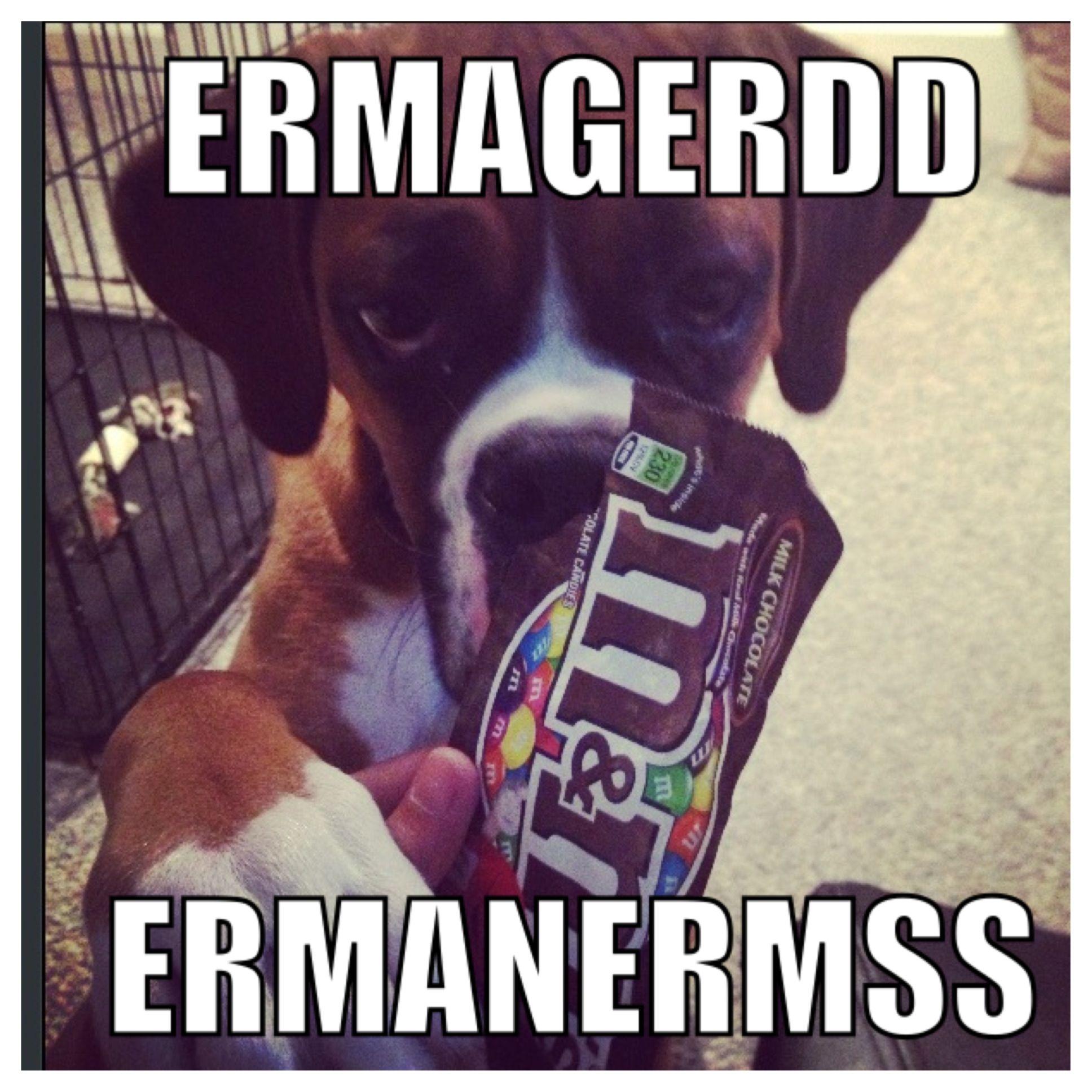 Boxer Meme Boxer Memes Funny Boxer Boxer Dogs