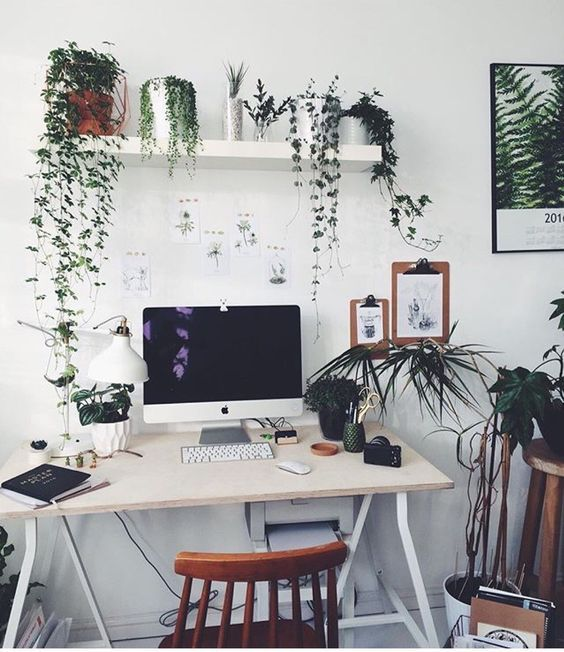 Add Some Greenery In The Office For More Productivity