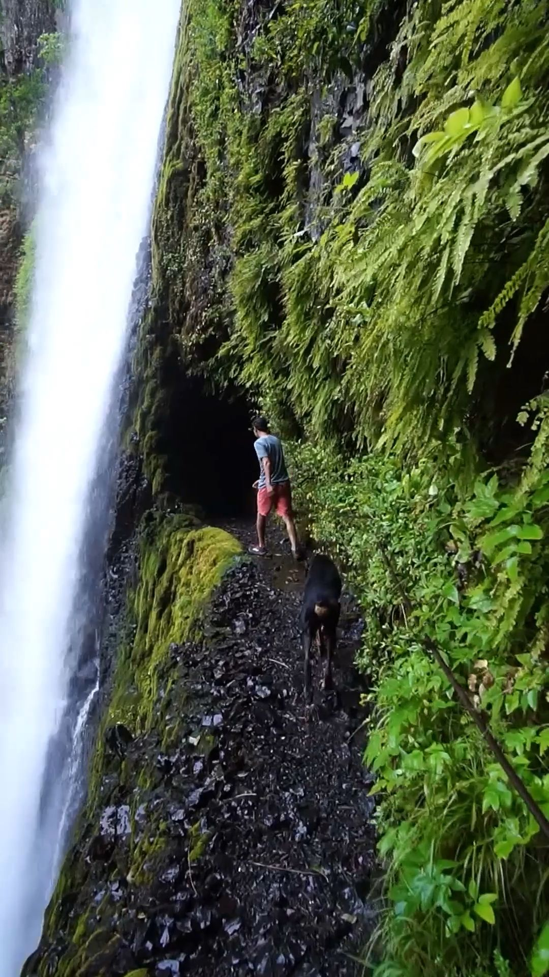 Eagle Creek Trail near Portland, Oregon - one of the best hikes in the Columbia River Gorge