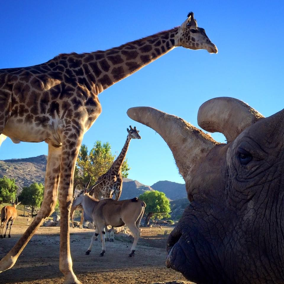 Nola S World Photo By Mike Veale San Diego Zoo Animals World Photo