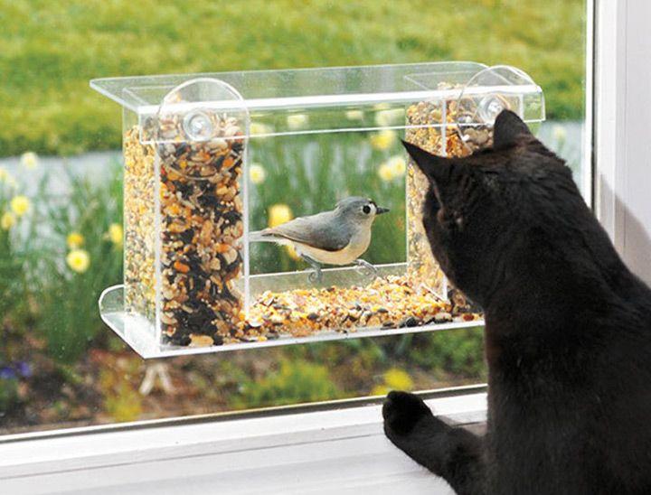 Mangeoire Pour Oiseaux De Fenêtres Window Bird Feeder Bird Feeders Window Mounted Bird Feeder