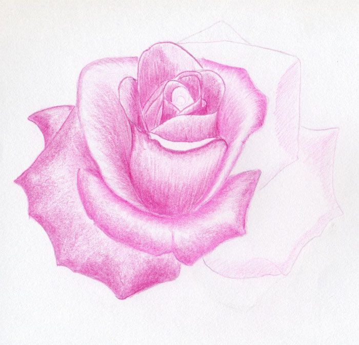 How To Draw A Rose | Rose sketch, Flower drawing, Roses drawing