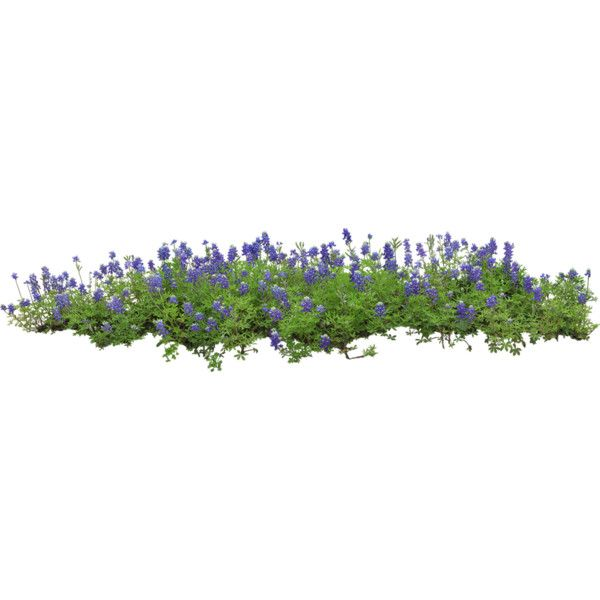 Flower Bed Liked On Polyvore Featuring Flowers Plants Nature Grass And Backgrounds Tree Photoshop Free Watercolor Flowers Landscape Architecture Graphics