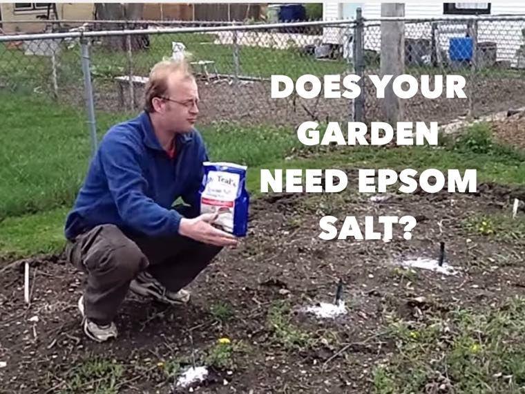 epsom salt gardening. Surprising Ways A Pinch (or Handful) Of Epsom Salt Can Change Your Garden Gardening