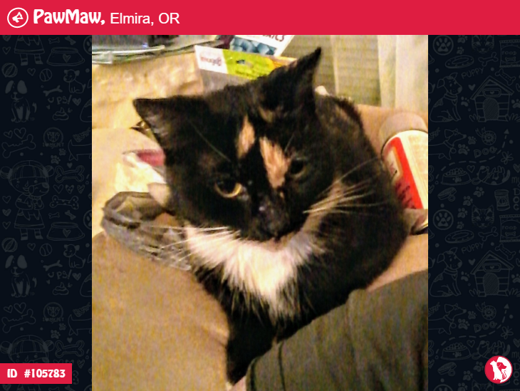 CAT LOST IN ELMIRA, White toes, Puppies, Whiskers