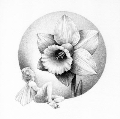Narcissus Sketch Flower Sketches Birth Flower Tattoos Flower Drawing
