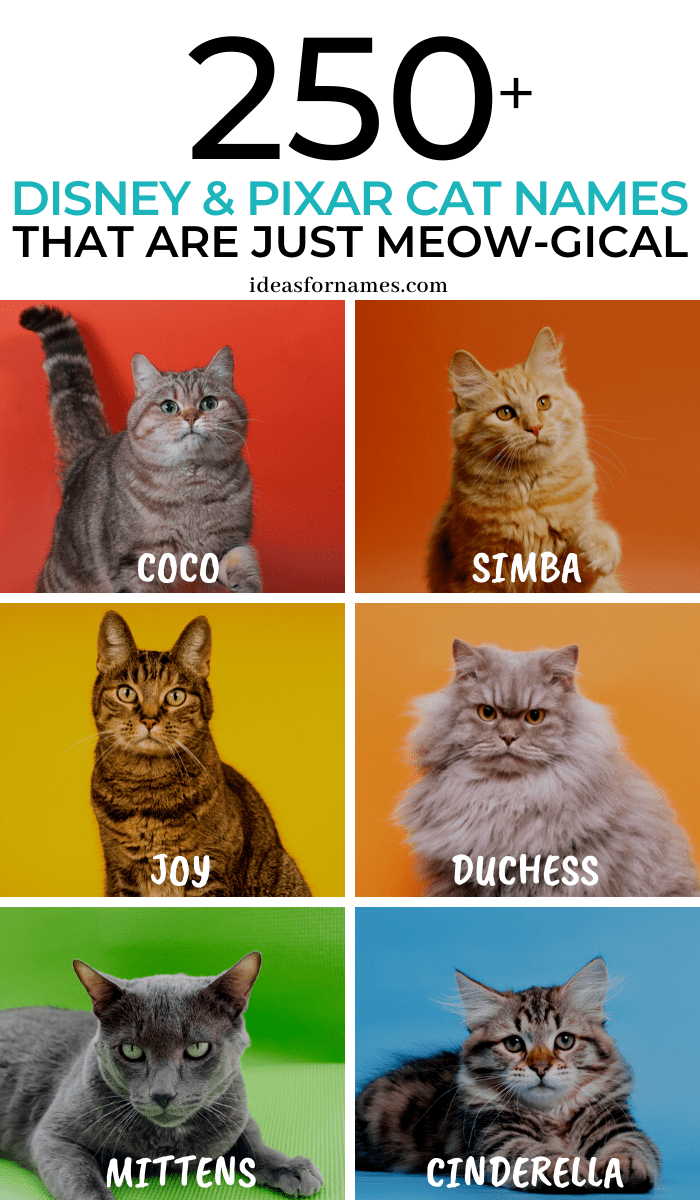 Disney Cat Names That Are Just Meow Gical Pixar Names For New Kittens Cats Il Cat Cats Disney Kittens In 2020 Disney Cat Names Cat Names Girl Cat Names