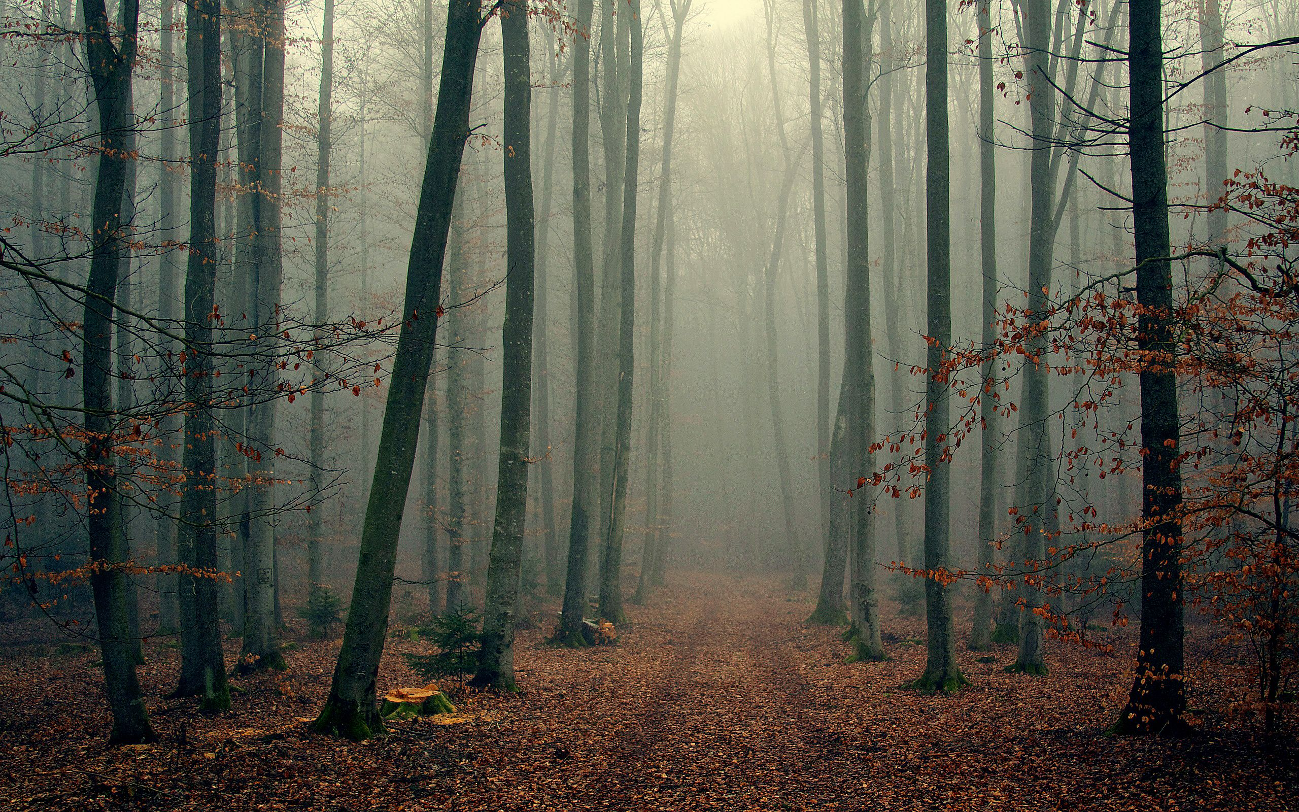 Pin By Vilaronnie On Nature Foggy Forest Forest Wallpaper