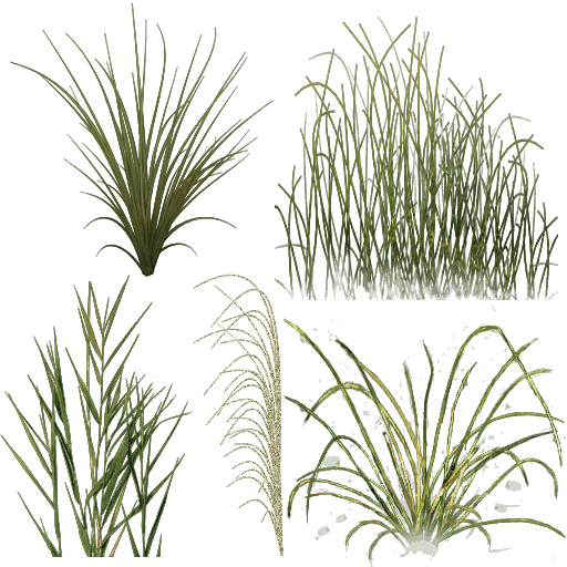 Png Water Plants Buscar Con Google Arvore Desenho Photoshop Vegetacao
