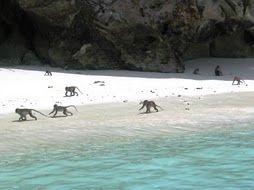 Monkey Beach Penang Island Vibes