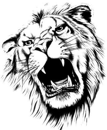 pingl par steve tremblay sur lions tatouage lion tatouage et dessin lion. Black Bedroom Furniture Sets. Home Design Ideas