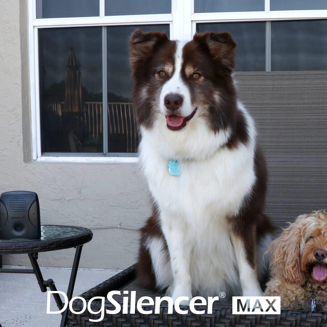 Dog Silencer Max Dogs Shock Collar Best Bark Collar