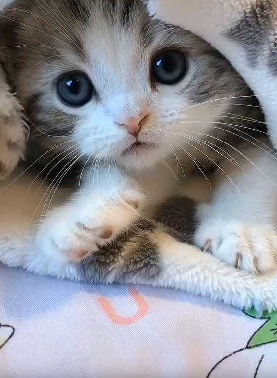 Pin On Gatos Fofos