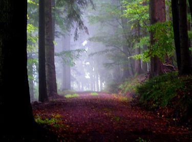 So Beautiful... La forêt, c'est encore un peu du Paradis perdu. Dieu n'a  pas voulu que le premier jardin fût effacé par le premi… | Jardins, Marcel  aymé, Foret